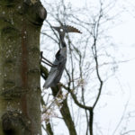 Lennie the Woodpecker created by local resident John Lennie out of a shovel and circular saw